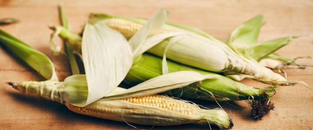 Épi de maïs, mi épi, mi maïs 1