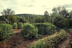 la-permaculture-reconnue-comme-solution-possible