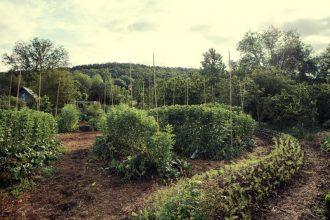 la-permaculture-reconnue-comme-solution-possible
