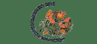 salade-de-fenouil-aux-crevettes-recette-gazette-180c