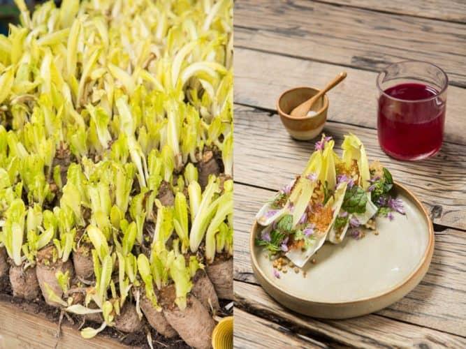 À gauche, les endives sous la serre de Dries, les toutes dernières de la saison ! À droite, voilà comment Florent les réinvente dans ses assiettes - © 180°C  Photographie Camille Oger