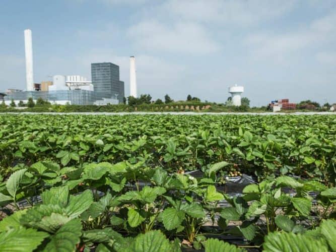 Chaque année, le béton gagne du terrain sur ces terres agricoles qui font saliver les entrepreneurs - © 180°C - Éric Fénot