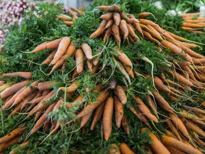Sur les étals d'Elise et Thierry des carottes plus qu'aimables car très bien élevées ! - © 180°C - Éric Fénot