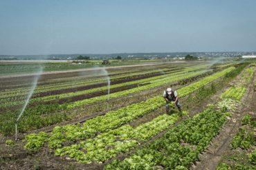 Thierry-Riant-maraicher-Des-légumes-bien-élevés-gazette-180c