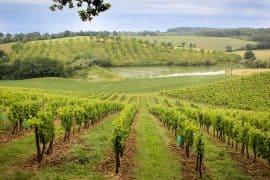 Domaine-Elian-Da-Ros-Sandrine-Farrugia-gazette-180c-12°5
