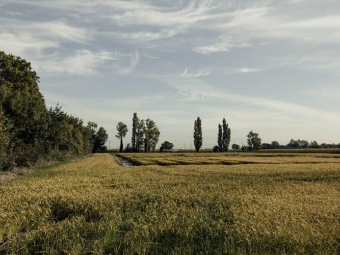 Sur une année il faut en moyenne 28 000 m3 d'eau pour un hectare de riz - © 180°C - Photographie Éric Fénot
