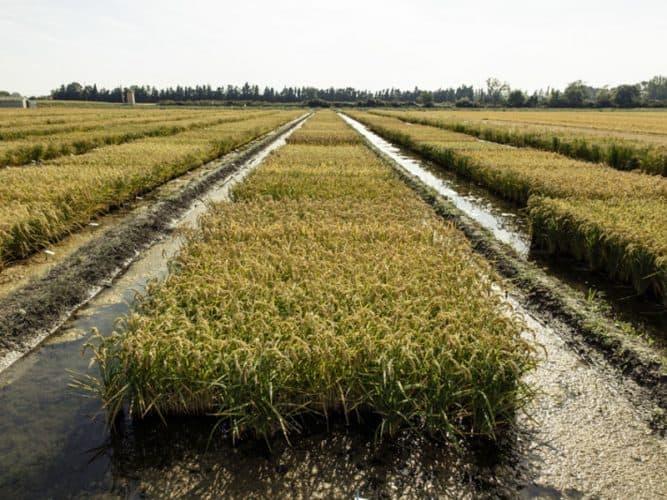 Pendant l'été chaque riziculteur gère l'apport en eau, en fonction des températures extérieures et de l'évaporation naturelle - © 180°C - Photographie Éric Fénot