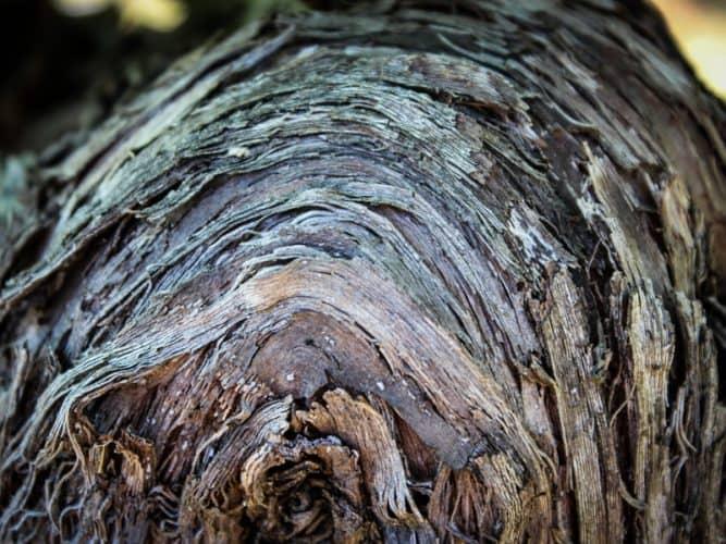 Des ceps plantés pas le papa - © 180°C - Photographie Stephan Lagorce
