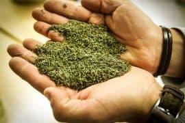 herbes-de-provence-gazette-180c-1170px