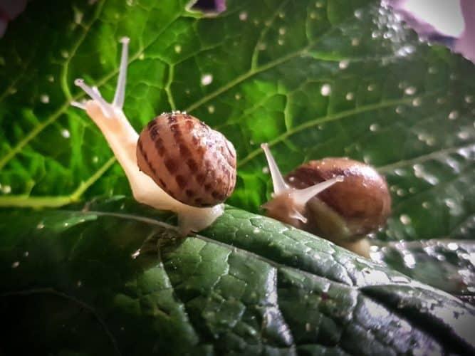 Escargots de la ferme de Nawfal - © 180°C - Photographie Chloé Domat