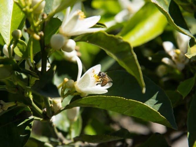 La part des abeilles - © 180°C - Photographie Camille Oger