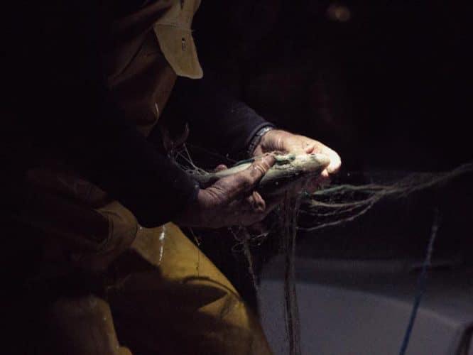 À chaque poisson sa taille de maille, 40 mm pour la perche, 35 pour l'omble-chevalier, 50 pour la féra (appelée aussi lavaret) - © 180°C - Photographie Éric Fénot