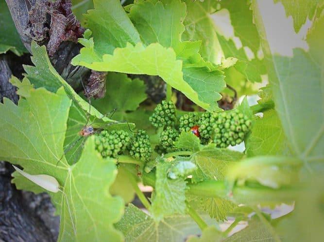 Biodiversité sur les grappes ! © 180°C