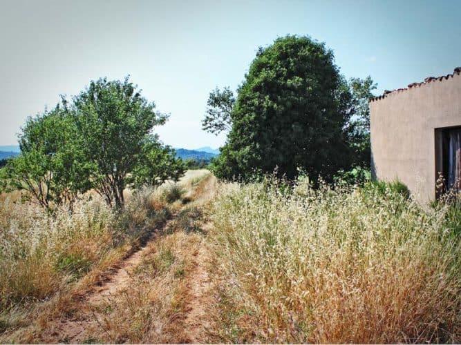 Le chemin pour aller aux vignes, à droite, la cabane du grand-père.- © 180°C