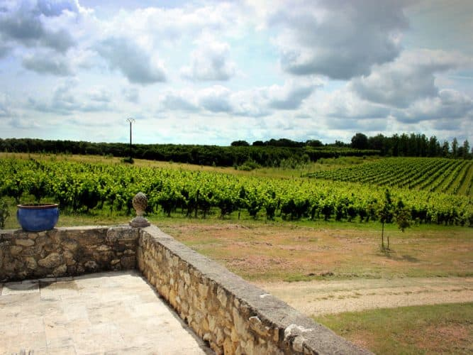 Partie des vignes du domaine... © 180°C - S. Lagorce