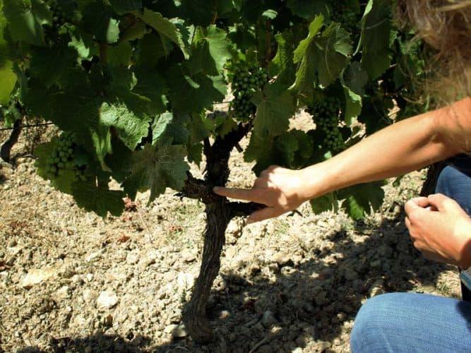 La vigne, aux petits soins  - 180°C - Photographie Stephan Lagorce