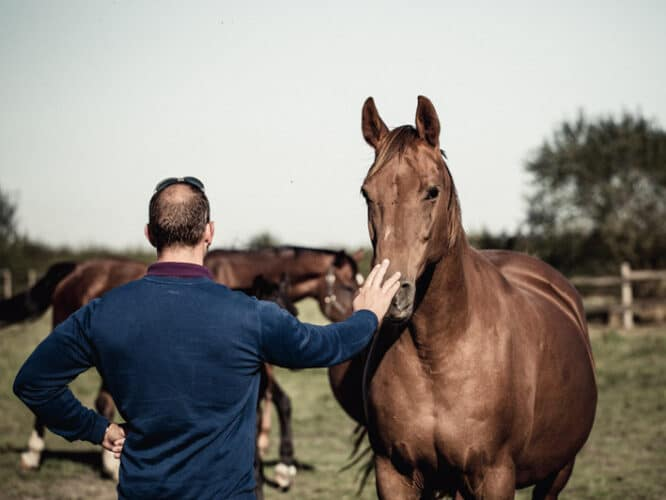 Eric Sanceau, outre sa passion pour les chevaux, reste un éleveur dans l'âme. Il possède notamment onze races de bœufs - © 180°C - Photographie Eric Fénot