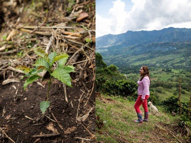 Ducelina Vargas sur ses plantations et l'un de ses jeunes plants de café - © 180°C Photographie Camille Oger