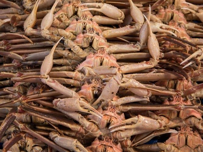 Un bon crabe doit avoir de bonnes dents - © 180°C Photographie Camille Oger