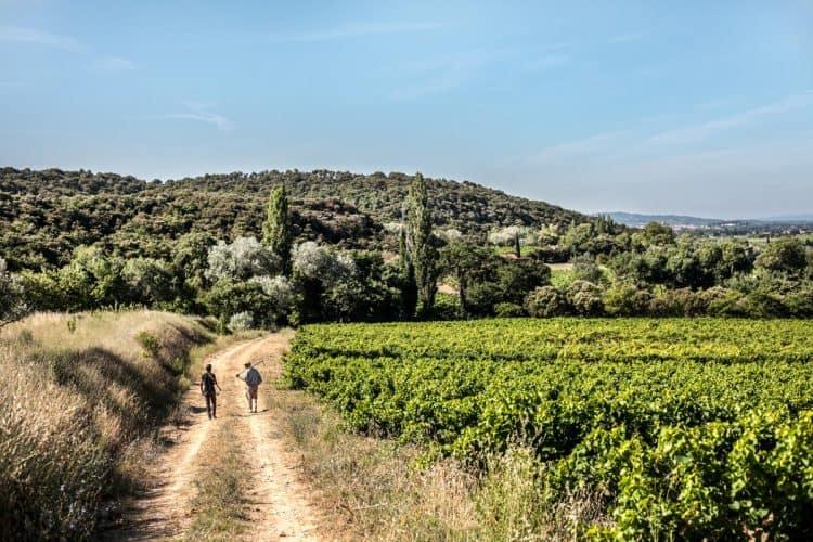 Gramenon se déploie aujourd'hui sur 16,5 hectares de vigne posés sur des sables et des argiles autour de la maison - © 180°C Photographie Jean-Luc Luyssen