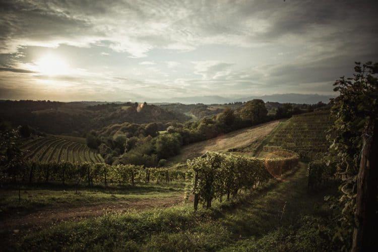 Les vignes épousent l'ondulation naturelle des collines - © 180°C - Photographie Eric Fénot