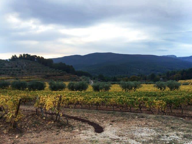 Vignes et oliviers à Auriol, au coeur du terroir provençal - © 180°C - Photographie Mayalen Zubillaga