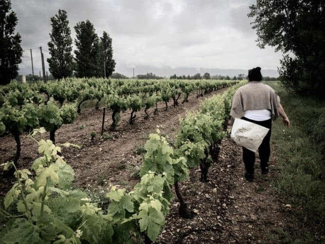 Ovssana en cueillette - © Photographie Mayalen Zubillaga