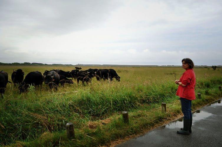 Marisa gère son troupeau de 30 bufflones, un taureau Buffalo et huit veaux, plus ceux à venir - © 180°C - Photographie Eleonore Bohn