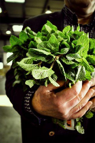 Monsieur Henry source également des feuilles de menthe et de verveine bio, glacées au sucre individuellement puis recouvertes d'une fine couche de chocolat - © 180°C - Photographie Fabrice Bloch