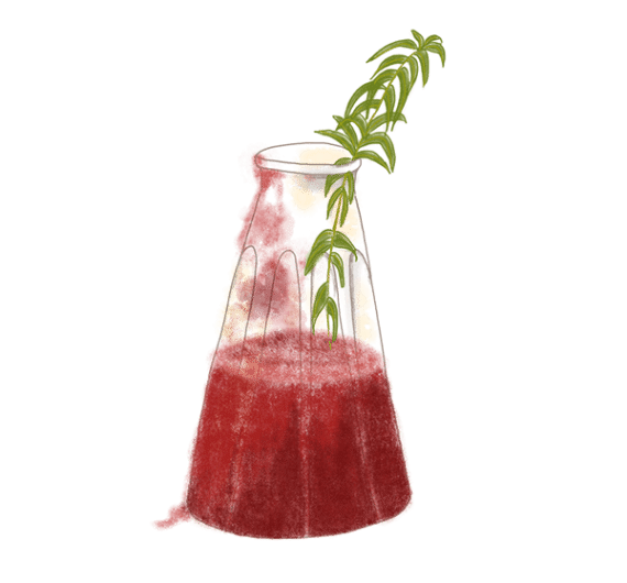 Soupe de fraises à la verveine 14