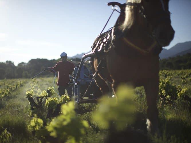 © Image extraite du film Wine Calling