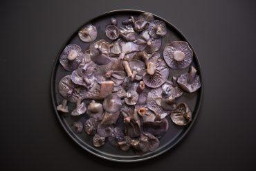 champignon-pied-bleus-180c-la-gazette