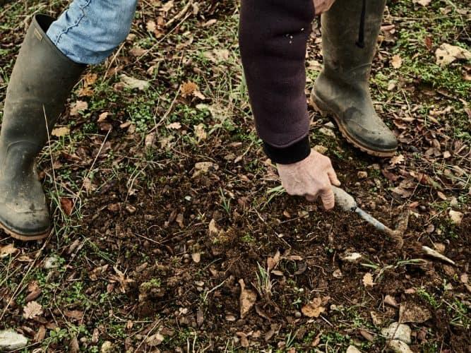 Couverte de terre, la truffe n'est pas évidente à repérer pour les néophytes que nous sommes- © 180°C - Photographie Eric Fénot