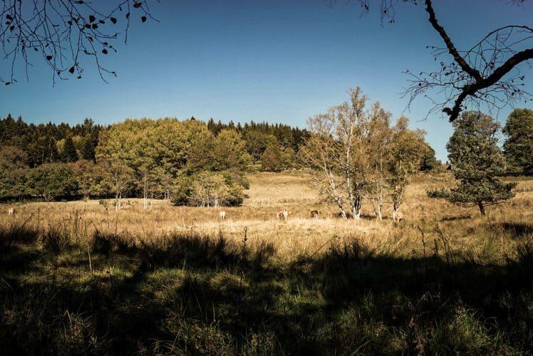 Bienvenue dans le parc régional Livradois-Forez - © 180°C - Photographie Jill Cousin