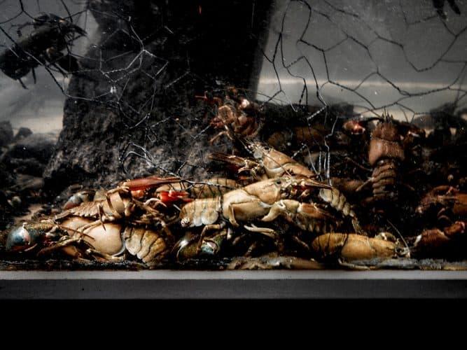 Le vivier aux écrevisses - © 180°C - Photographie Manu Rodriguez