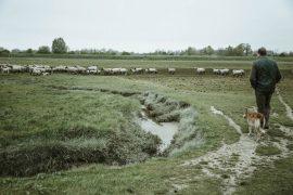 agneau prés salés