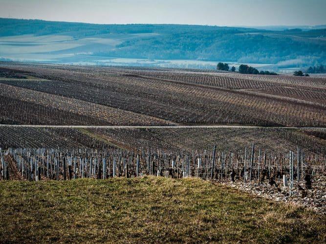 vignoble de Chablis - © 180°C Photographie Manu Rodriguez