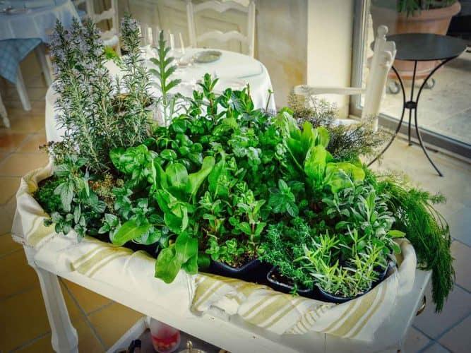 Le chariot d'herbes, préparé par les équipes pour la composition des tisanes fraîches servies en fin de repas - © 180°C  Photographie Manu Rodriguez