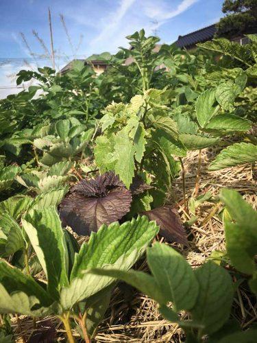 Le producteuracoquineles vignes à des fruits et légumes de saison - © 180°C - Photographie Julia Bouchet