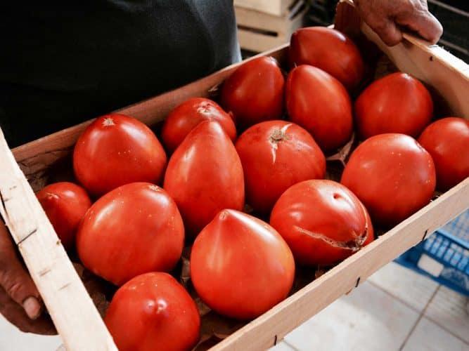 La commande de tomates de Jérôme Roy qui rejoindra le jour même les cuisines du Couvent des Minimes - © 180°C - Photographie Emmanuel Laveran
