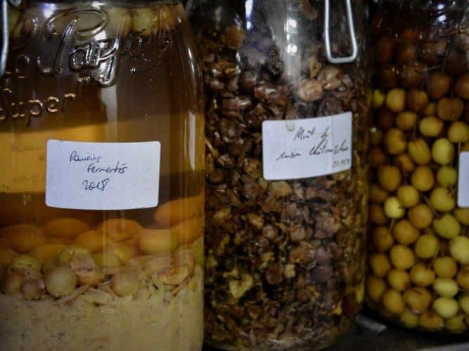 Conserves et fermentations de raisins et cerises - © 180°C - Photographie Manu Rodriguez
