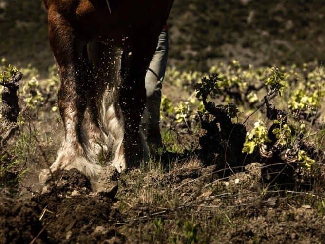 Le cheval de trait ne pose jamais le sabot au même endroit, évitant ainsi de tasser la terre et la vie qui s'y trouve comme le ferait un tracteur -  © Photographie Antonin Bonnet pour Viamo