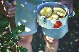 Infusion glacée romarin et fleur d'oranger et sablés au romarin 3