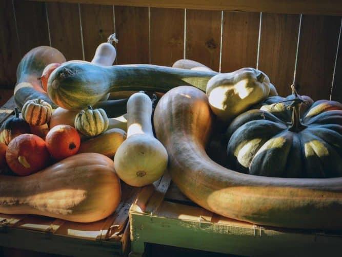 Courge Toujours : au jardin, Alexandre produit 1 tonne de cucurbitacées chaque année. © 180°C - Photographie Manu Rodriguez