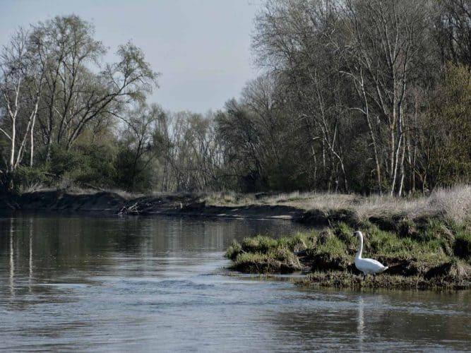 Bords de Loire sauvages - © 180°C - Photographie Manu Rodriguez
