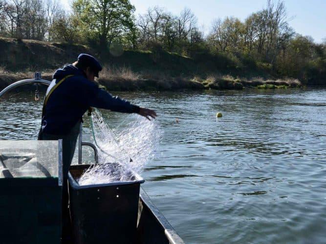 le filet dérivant, pour capturer l'aspe ou le mulet, n'est normalement utilisé que dans les estuaires. La faible profondeur du fleuve en fait une pêche technique et difficile. - © 180°C - Photographie Manu Rodriguez