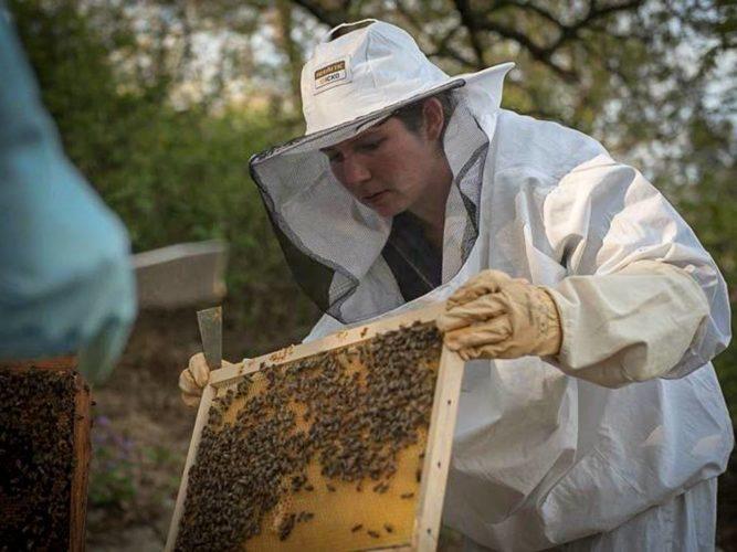 Laure bichonne ses abeilles - © Domaine de Lorient
