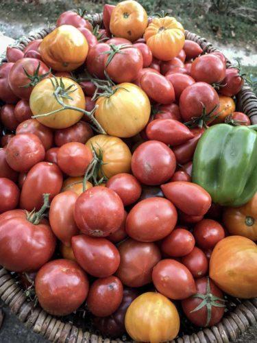 Tomates et poivrons de la ferme - © Domaine de Lorient