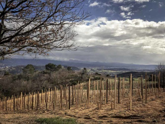 De nouvelles plantations sur le domaine - © Domaine de Lorient