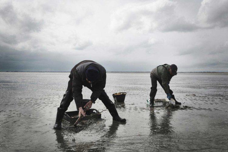 Pliés en deux pour gratter inlassablement le sable, le métier est rude, surtout lorsque la météo décide de s'en mêler - © 180°C - Photographie Éric Fénot